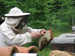what is beekeeping beekeeping is the human activity of