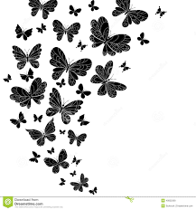 black and white butterflies pictures collection 71