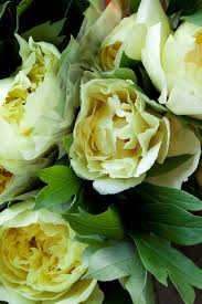 Pictures Of Garden Flowers by Say Hello To Our New Website U2013 Dennis Edwards Flowers