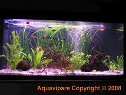 idee deco aquarium idée décoration d u0027aquarium pour guppy