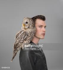 Owl Shoulder - portrait of with owl perched on shoulder stock photo getty
