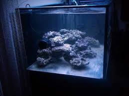 Aquascaping A Reef Tank Reefkeeping Magazine Tank Of The Month