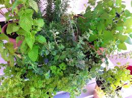 herb gardening on the road u2013 diet for a tiny house