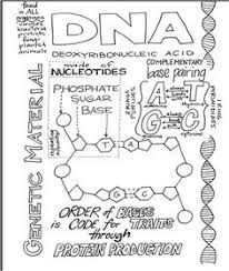 pbs nova dna worksheet nova online teachers student handout