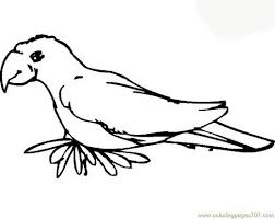coloring pages parrot birds parrots free printable page 702977