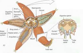 moose anatomy diagram gallery learn human anatomy image
