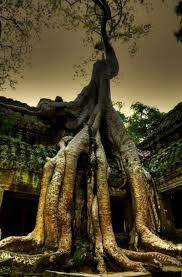 the world u0027s most amazing trees