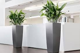 plantes bureau offres location plantes vertes bureaux bac gris accueil votre