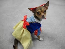 target dog halloween costumes creative pet halloween costumes at target best moment dog
