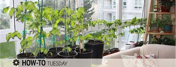 how do i grow vegetables indoors over winter farm and dairy