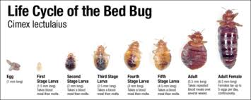 What Kills Bed Bugs Naturally Bed Bug Killer Natural Two Room Treatment Kit By Veterans Pest Control