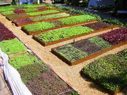 cover crops for winter raised beds urban edible