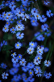 513 best a blue garden images on pinterest blue flowers pretty
