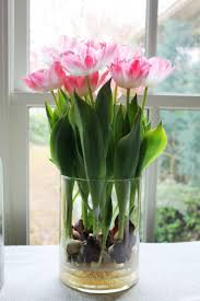 best 25 fleur de force house ideas on pinterest growing tulips