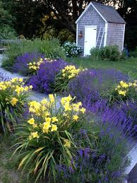 best 25 daylily garden ideas on pinterest driveway border lily