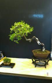 pot bonsai design 472 best bonsai literati images on pinterest bonsai bonsai