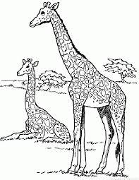Giraffe Coloring Pages Giraffe Coloring Pages by Giraffe Coloring Pages