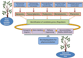 frontiers potential biotechnological strategies for the cleanup