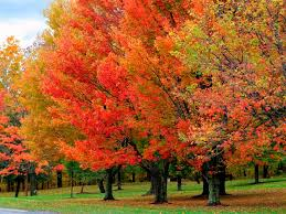 88 best fall foliage images on fall fall trees and