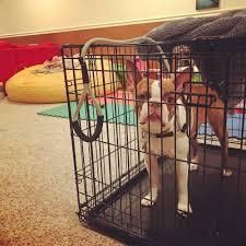 crate training photos u2014 be the boss dog training serving utah county