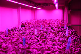 horticultural led grow lights led grow lights horticultural advantage led grow lights lighting
