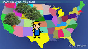 Native Species Definition U0026 Examples Video U0026 Lesson Transcript