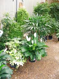 Tropical Plants Pests Tropical Plants Need Winter Shelter Lsu Agcenter