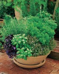 Potted Herb Garden Ideas 171 Best Parsley Rosemary And Thyme Images On Pinterest