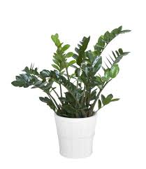 5 hard to kill houseplants for apartments with low light