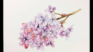 lilac flowers watercolor lilac flowers painting demonstration