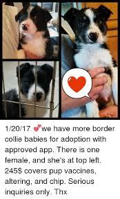 Border Collie Meme - search border collie memes on me me