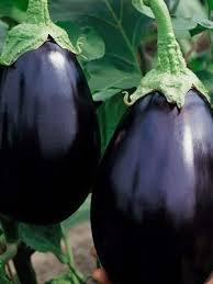 eggplant seeds organic vegetable seeds irish eyes garden seeds