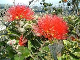 native plants in hawaii resources