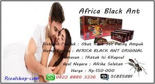 obat kuat herbal africa black ant asli apotekherbal123 com www
