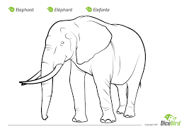 the elephant coloring sheet for kids