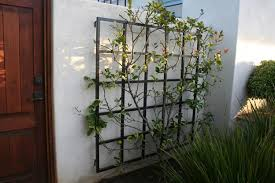 Trellis On Awesome Metal Garden Wall Trellis 17 Best Ideas About Metal