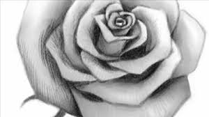 Drawing by How To Draw An Open Rose Youtube