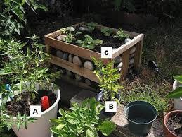 container vegetable gardening tomato u003d a pepper u003d b cucumber u003d c