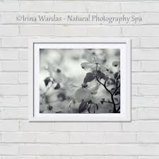White Flower Wall Decor Fine Art Black White Dogwood Tree Nature Photography Wall Decor
