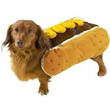 Female Dog Halloween Costumes Amazon Casual Canine Diggity Dog Mustard Costume