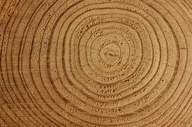 wood tree rings images Tree rings the new kind of record on a turntable aaec high jpg