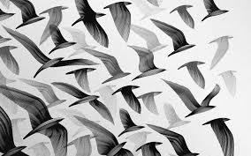 black and white birds backgrounds wallpaper with bird print