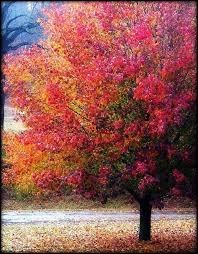 best 25 colorful trees ideas on crayola tree