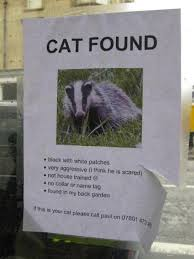 Missing Cat Meme - lost cat why evolution is true
