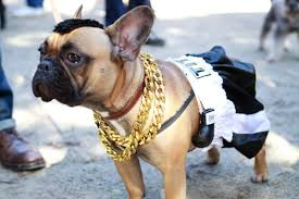 pets costumes halloween halloween dog costume ideas 32 easy cute costumes for your