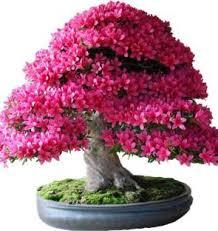 seeds buy plant seeds online at best prices in india flipkart com