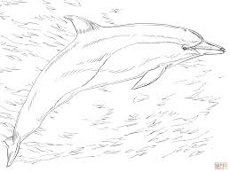 common dolphin coloring page free printable coloring pages
