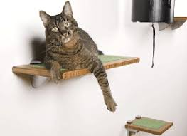 Wall Shelves For Cats Modern Cat Furniture Design Ideas Wall Mounted And Heated Beds