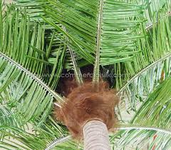 outdoor palm tree l outdoor artificial tropical coconut palm tree exterior