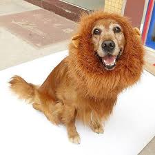 Dog Halloween Costume Lion Mane Doglemi Halloween Costume Lion U0027s Mane Dog Wild